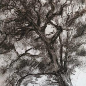 Esquisse d'arbre